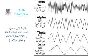بقلم الدكتور محمود المساد نتائج أبحاث الدماغ وعلاقتها بعمليات التعلم والتفكير والإبداع 3
